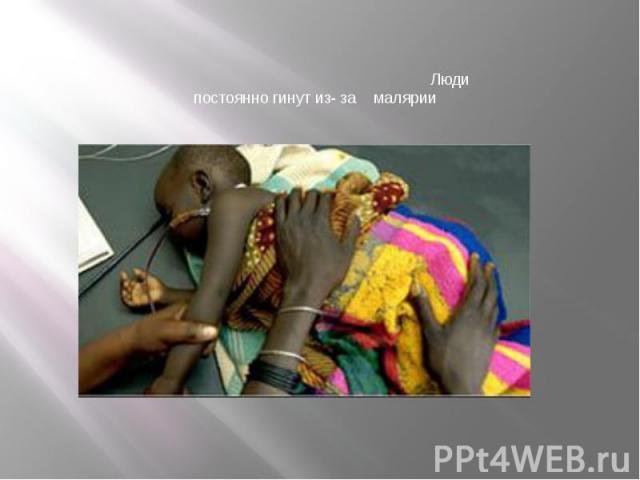 Люди постоянно гинут из- за малярии