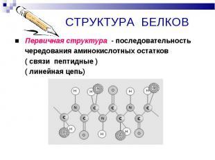 ■ Первичная структура - последовательность ■ Первичная структура - последователь