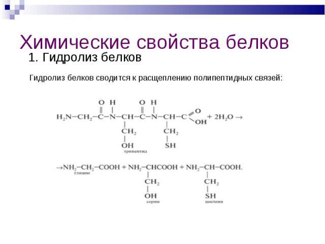 1. Гидролиз белков 1. Гидролиз белков Гидролиз белков сводится к расщеплению полипептидных связей: