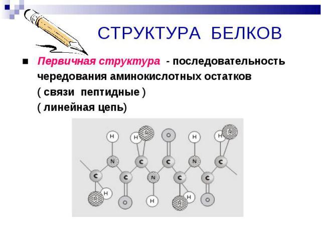 ■ Первичная структура - последовательность ■ Первичная структура - последовательность чередования аминокислотных остатков ( связи пептидные ) ( линейная цепь)