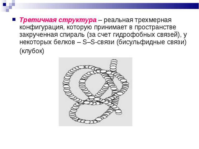 Третичная структура – реальная трехмерная конфигурация, которую принимает в пространстве закрученная спираль (за счет гидрофобных связей), у некоторых белков – S–S-связи (бисульфидные связи) Третичная структура – реальная трехмерная конфигурация, ко…