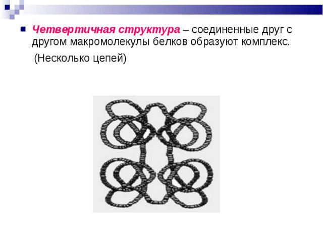 Четвертичная структура – соединенные друг с другом макромолекулы белков образуют комплекс. Четвертичная структура – соединенные друг с другом макромолекулы белков образуют комплекс. (Несколько цепей)