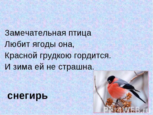 Замечательная птица Замечательная птица Любит ягоды она,Красной грудкою гордится.И зима ей не страшна. снегирь