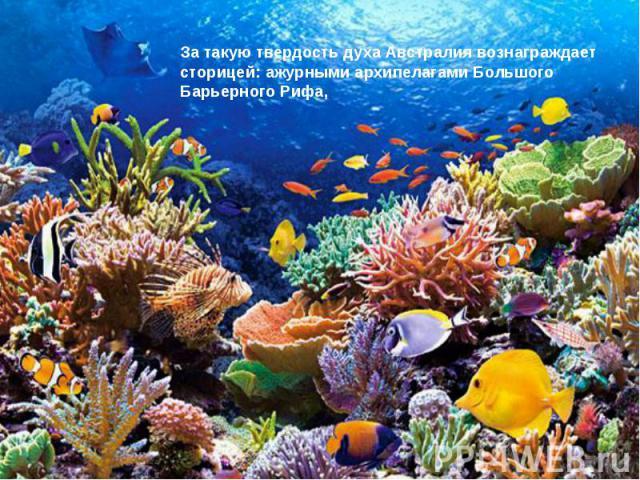 За такую твердость духа Австралия вознаграждает сторицей: ажурными архипелагами Большого Барьерного Рифа,