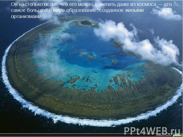 Он настолько велик, что его можно заметить даже из космоса — это самое большое в мире образование, созданное живыми организмами