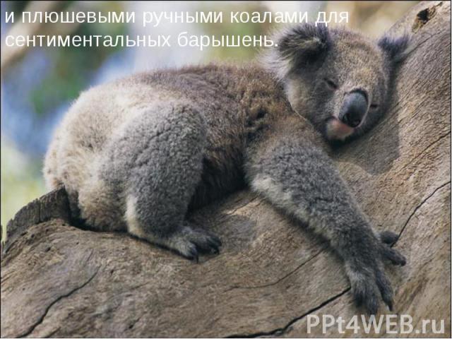 и плюшевыми ручными коалами для сентиментальных барышень.