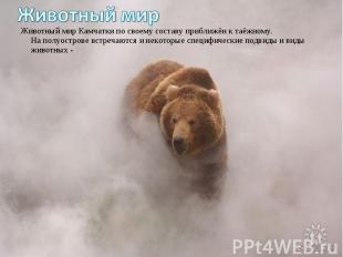 Животный мир Камчатки по своему составу приближён к таёжному. На полуострове вст
