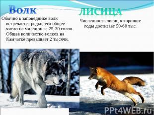 Обычно в заповеднике волк встречается редко, его общее число на миллион га 25-30