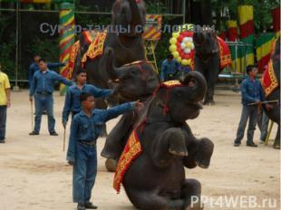 Супер-танцы со слонами.