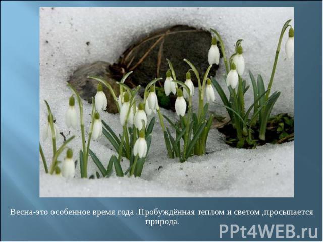 Весна-это особенное время года .Пробуждённая теплом и светом ,просыпается природа. Весна-это особенное время года .Пробуждённая теплом и светом ,просыпается природа.