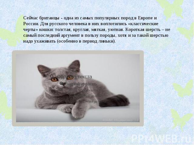 Сейчас британцы - одна из самых популярных пород в Европе и России. Для русского человека в них воплотились «классические черты» кошки: толстая, круглая, мягкая, уютная. Короткая шерсть – не самый последний аргумент в пользу породы, хотя и за такой …