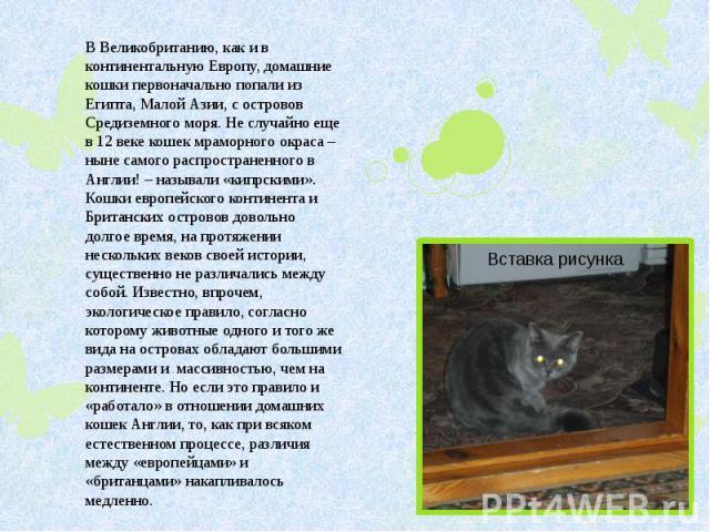 В Великобританию, как и в континентальную Европу, домашние кошки первоначально попали из Египта, Малой Азии, с островов Средиземного моря. Не случайно еще в 12 веке кошек мраморного окраса – ныне самого распространенного в Англии! – называли «кипрск…