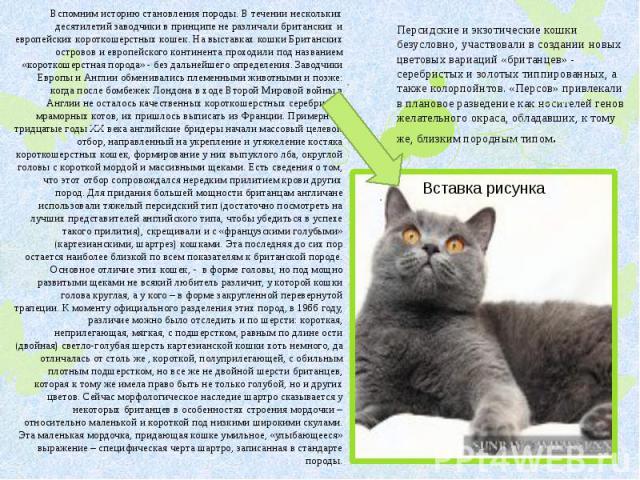 Персидские и экзотические кошки безусловно, участвовали в создании новых цветовых вариаций «британцев» - серебристых и золотых типпированных, а также колорпойнтов. «Персов» привлекали в плановое разведение как носителей генов желательного окраса, об…