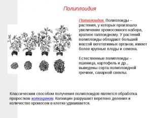 Полиплоидия. Полиплоиды – растения, у которых произошло увеличение хромосомного