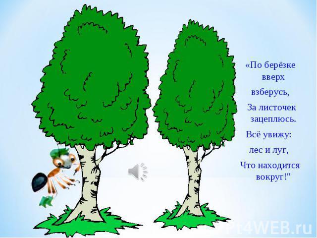 «По берёзке вверхвзберусь, За листочек зацеплюсь.Всё увижу: лес и луг, Что находится вокруг!