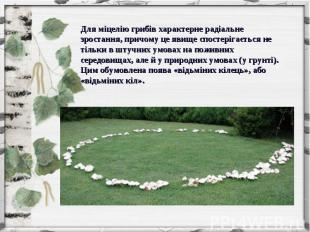 Для міцелію грибів характерне радіальне зростання, причому це явище спостерігаєт