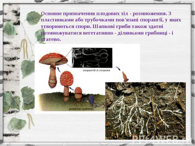 Основне призначення плодових тіл - розмноження. З пластинками або трубочками пов'язані спорангії, у яких утворюються спори. Шапкові гриби також здатні розмножуватися вегетативно - ділянками грибниці - і статево.