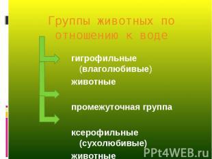 гигрофильные (влаголюбивые) гигрофильные (влаголюбивые) животные промежуточная г