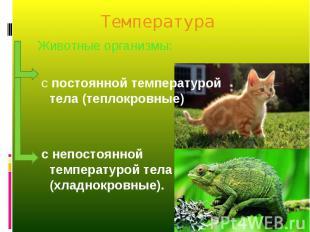 Животные организмы: Животные организмы: с постоянной температурой тела (теплокро