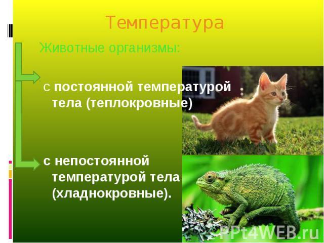 Животные организмы: Животные организмы: с постоянной температурой тела (теплокровные) с непостоянной температурой тела (хладнокровные).
