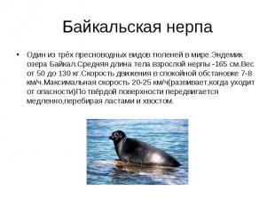 Один из трёх пресноводных видов тюленей в мире.Эндемик озера Байкал.Средняя длин