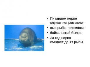 Питанием нерпе служат непромысло- Питанием нерпе служат непромысло- вые рыбы-гол