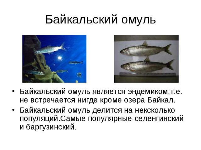 Байкальский омуль является эндемиком,т.е. не встречается нигде кроме озера Байкал. Байкальский омуль является эндемиком,т.е. не встречается нигде кроме озера Байкал. Байкальский омуль делится на нексколько популяций.Самые популярные-селенгинский и б…