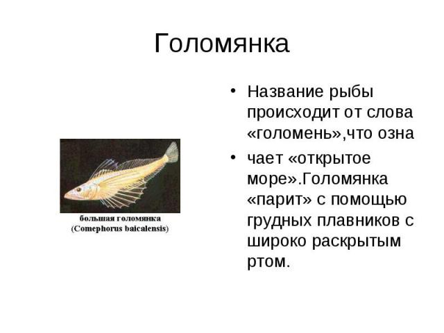 Название рыбы происходит от слова «голомень»,что озна Название рыбы происходит от слова «голомень»,что озна чает «открытое море».Голомянка «парит» с помощью грудных плавников с широко раскрытым ртом.