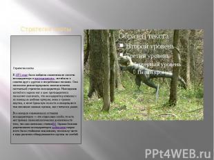 Стратегия охотыСтратегия охотыВ1971 годубыли найдены окаменевшие ске