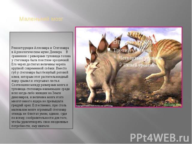 Реконструкция Аллозавра и Стегозавра в Археологическом музее ДенвераВ сравнении с размерами туловища голова у стегозавра была поистине крошечной. Его череп достигал величины черепа крупной современной собаки. Вместо губ у стегозавра был беззубы…
