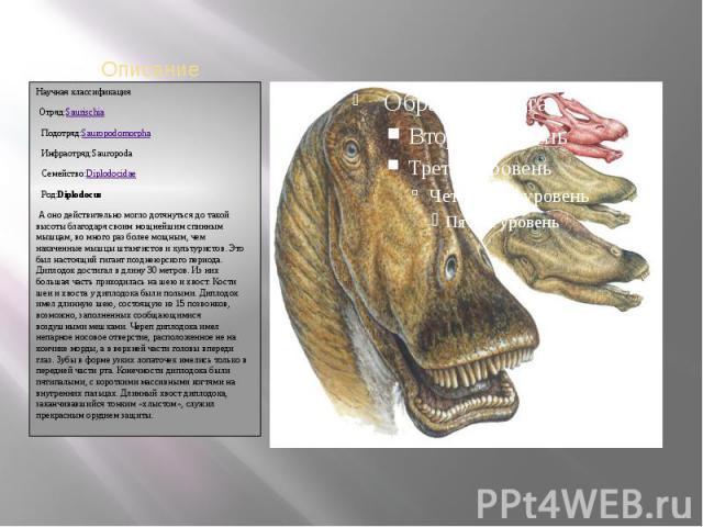 Научная классификацияОтряд:SaurischiaПодотряд:SauropodomorphaИнфраотряд:SauropodaСемейство:DiplodocidaeРод:DiplodocusА оно действительно могло дотянуться до такой высоты благодаря своим мощнейшим спинным мышцам, во много раз более мощн…