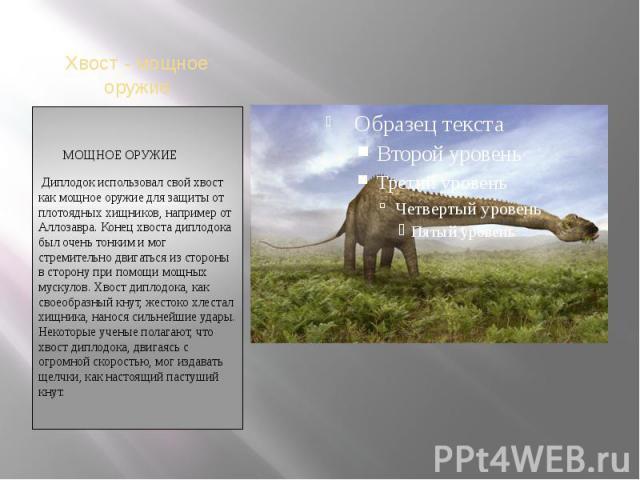 Хвост - мощное оружие МОЩНОЕ ОРУЖИЕ Диплодок использовал свой хвост как мощное оружие для защиты от плотоядных хищников, например от Аллозавра. Конец хвоста диплодока был очень тонким и мог стремительно двигаться из стороны в сторону при помощи мощн…