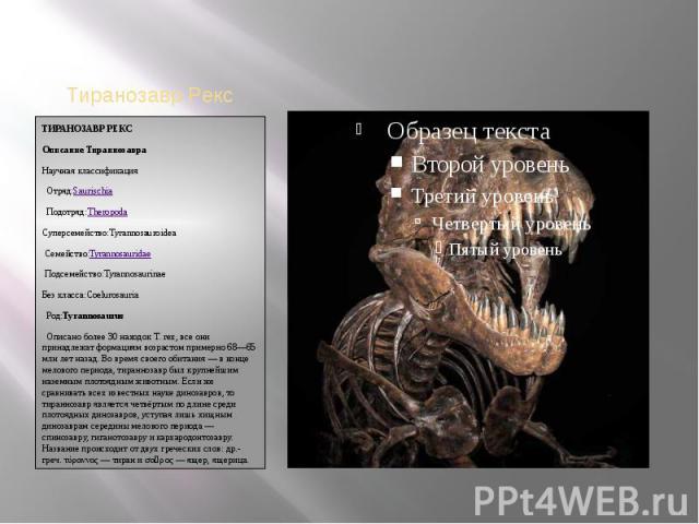 ТИРАНОЗАВР РЕКСОписание ТираннозавраНаучная классификацияОтряд:SaurischiaПодотряд:TheropodaСуперсемейство:TyrannosauroideaСемейство:TyrannosauridaeПодсемейство:TyrannosaurinaeБез класса:CoelurosauriaРод:TyrannosaurusОписано более 3…