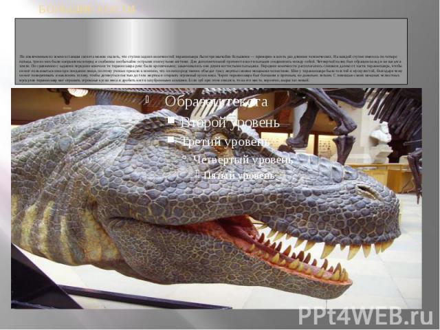 По извлеченным из земли останкам скелета можно сказать, что ступни задних конечностей тираннозавра были чрезвычайно большими — примерно в шесть раз длиннее человеческих. На каждой ступне имелось по четыре пальца, три из них были направлены вперед и…