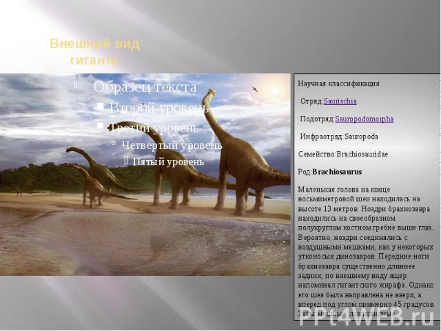 Научная классификацияОтряд:SaurischiaПодотряд:SauropodomorphaИнфраотряд:SauropodaСемейство:BrachiosauridaeРод:BrachiosaurusМаленькая голова на конце восьмиметровой шеи находилась на высоте 13 метров. Ноздри брахиозавра находились на св…