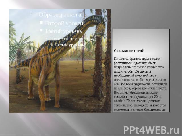 Сколько же он ел?Сколько же он ел?Питались брахиозавры только растениями и должны были потреблять огромное количество пищи, чтобы обеспечить необходимой энергией свое гигантское тело. Вследствие этого они, по всей видимости, оставляли после себя, ог…