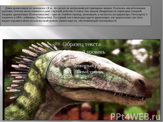 Длина дромеозавров не превышала 1,8 м., что делало их неопасными для травоядных ящеров. Охотились они небольшими группами, поэтому могли справиться даже с крупной добычей. Останки этих ящеров обнаружены на территории Северной Америки. дромеозав…