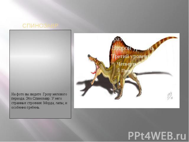 СПИНОЗАВРНа фото вы видите Грозу мелового периода. Это Спинозавр. У него странные строения: Морда, лапы, и особенно гребень.