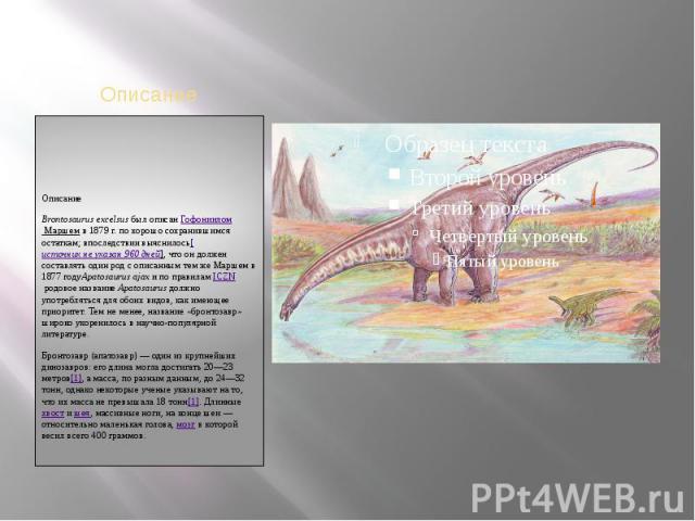 ОписаниеBrontosaurus excelsusбыл описанГофониилом Маршемв 1879г. по хорошо сохранившимся остаткам; впоследствии выяснилось[источникнеуказан960дней], что он должен составлять один род с описанным тем же Маршем в 1877годуApatosaurus ajaxи по…