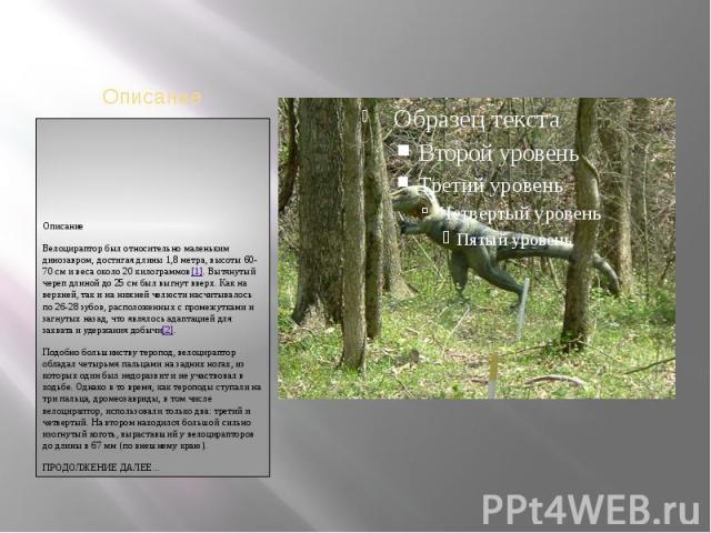 ОписаниеОписаниеВелоцираптор был относительно маленьким динозавром, достигая длины 1,8 метра, высоты 60-70 см и веса около 20 килограммов[1]. Вытянутый череп длиной до 25 см был выгнут вверх. Как на верхней, так и на нижней челюсти насчитывалось по …