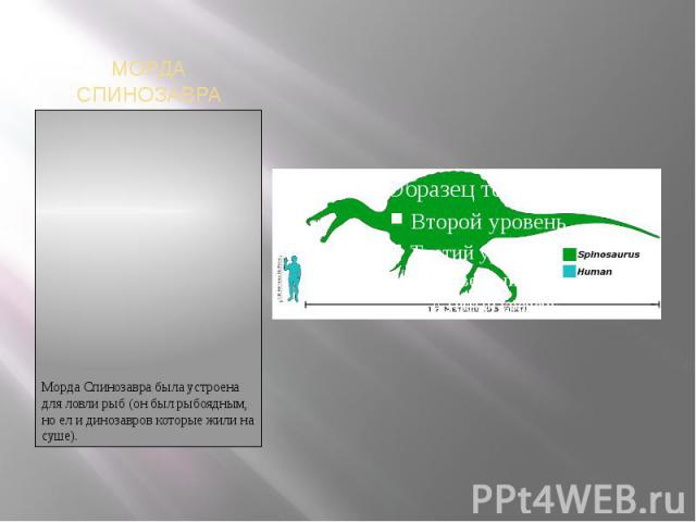 МОРДА СПИНОЗАВРАМорда Спинозавра была устроена для ловли рыб (он был рыбоядным, но ел и динозавров которые жили на суше).