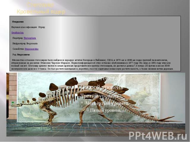 ОткрытиеНаучная классификацияОтряд: OrnithischiaПодотряд: ThyreophoraИнфраотряд:StegosauriaМножество останков стегозавров было найдено в карьерах штатов Колорадо и Вайоминг, США, в 1870-ых и 1880-ых годах группой палеонтологов, отправленных н…