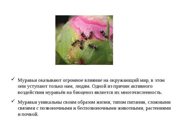 Муравьи оказывают огромное влияние на окружающий мир, в этом они уступают только нам, людям. Одной из причин активного воздействия муравьёв на биоценоз является их многочисленность. Муравьи оказывают огромное влияние на окружающий мир, в этом они ус…