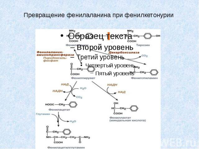 Превращение фенилаланина при фенилкетонурии