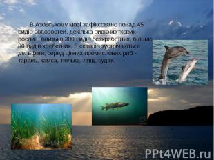 В Азовському морі зафіксовано понад 45 видів водоростей, декілька видів квіткови