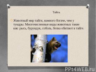 Тайга.Животный мир тайги, намного богаче, чем у тундры. Многочисленные виды живо