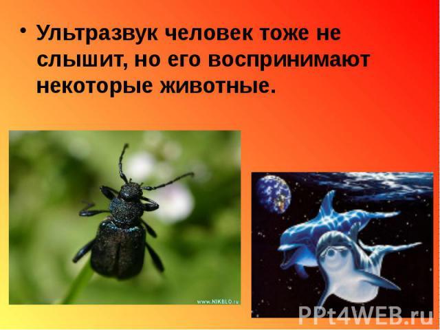 Ультразвук человек тоже не слышит, но его воспринимают некоторые животные. Ультразвук человек тоже не слышит, но его воспринимают некоторые животные.