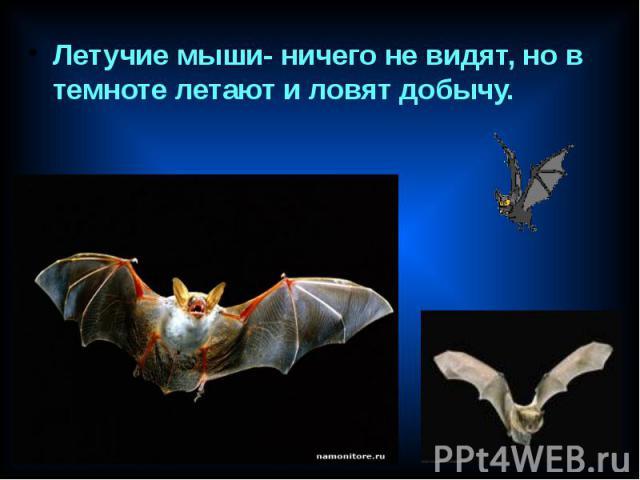 Летучие мыши- ничего не видят, но в темноте летают и ловят добычу. Летучие мыши- ничего не видят, но в темноте летают и ловят добычу.