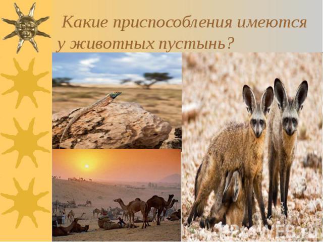 Какие приспособления имеются у животных пустынь?