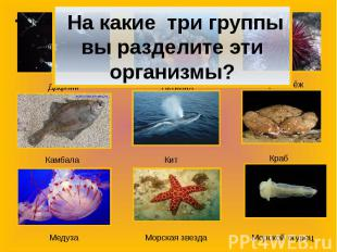 На какие три группы вы разделите эти организмы?